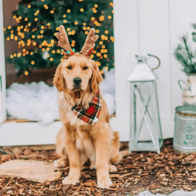 Holiday Gift Ideas for the Dog Lover