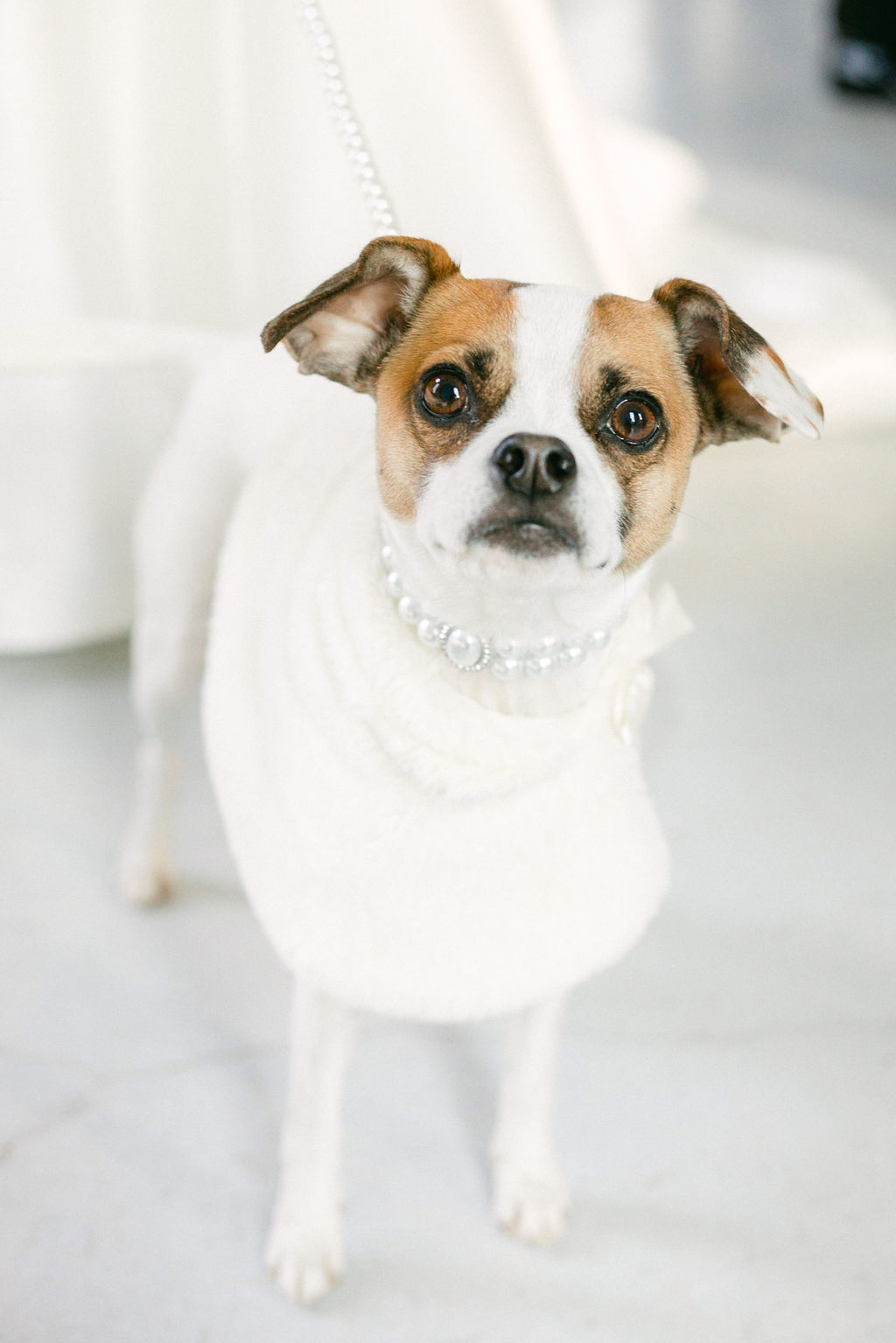 Dog's wedding accessories: White and Greenery Wedding at The Emerson by Alexa Kay Events