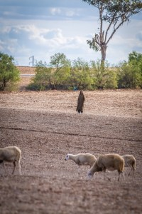 Marrokanischer Bauer zwischen Casablanca und Marrakesch - Foto: Alexander Baumbach