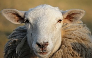 Don't be sheepish--examine your habits!