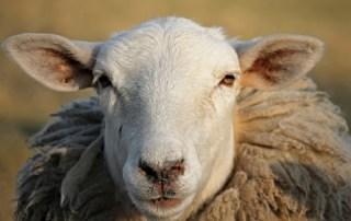 Don't be sheepish--examine your habits!
