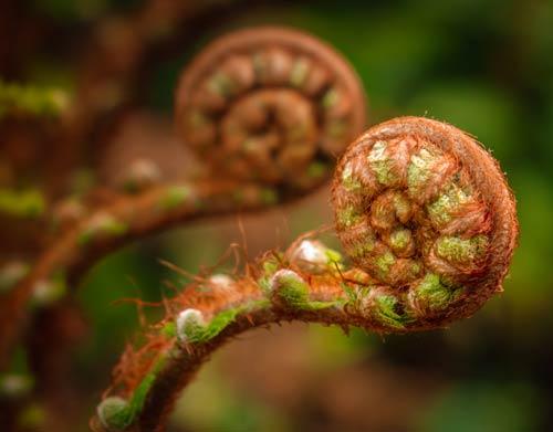 small-fern-spiral