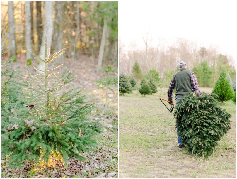 Alexandra Michelle Photography - First Christmas Tree-15
