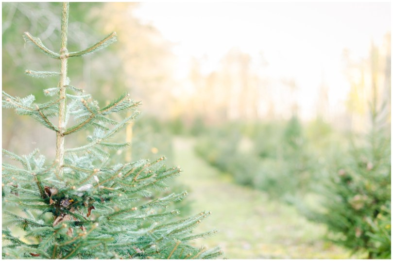 Alexandra Michelle Photography - First Christmas Tree-17