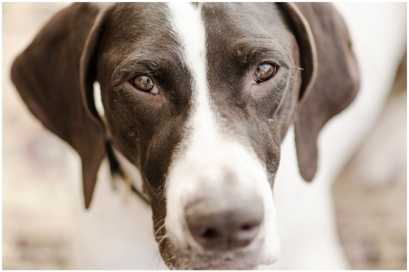Alexandra Michelle Photography - Dogs-3