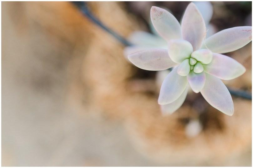 Alexandra Michelle Photography - Succulents-21