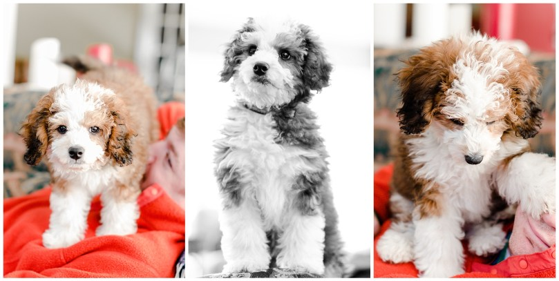 Alexandra Michelle Photography - Lucy the Bernadoodle-9