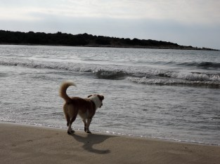 dog enjoying the sea