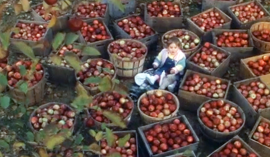 The Movie Baby Boom, Baby Elizabeth is down below amongst baskets of apples