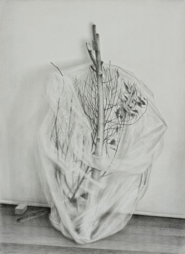 Pencil drawing by John Scurry 'Branch'