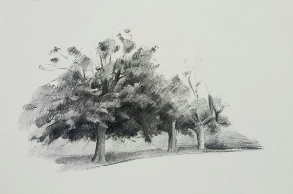Drawing by Evan Salmon 'Study of Coral trees, Jamberoo'