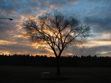 Tree at sunset in Edmonton, Alberta on Treaty 6 territory, a traditional gathering place for diverse indigenous peoples including the Cree, Blackfoot, Metis, Nakota Sioux, Iroquois, Dene, Ojibway/ Saulteaux/Anishinaabe, Inuit, and many others