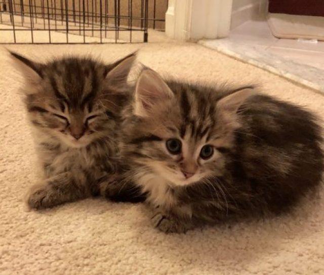 Kitten Season 2018 In Review