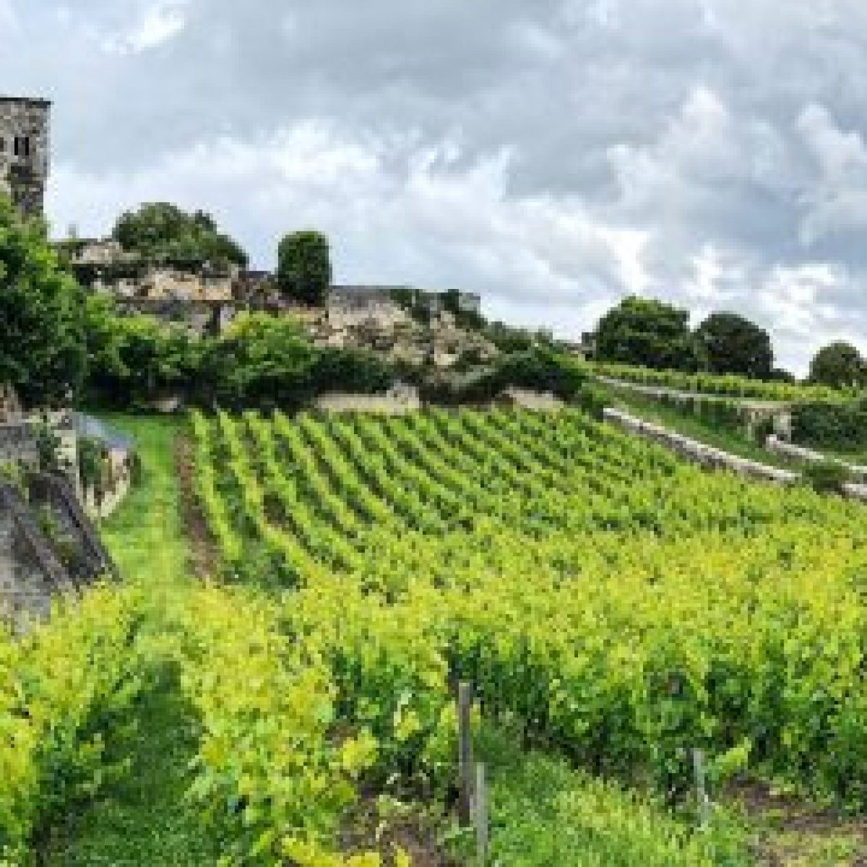 Medieval Ruins & Vineyards