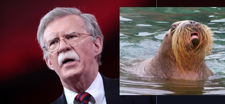 Image result for John Walrus Bolton