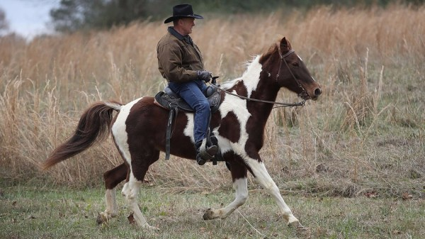 moore on horseback