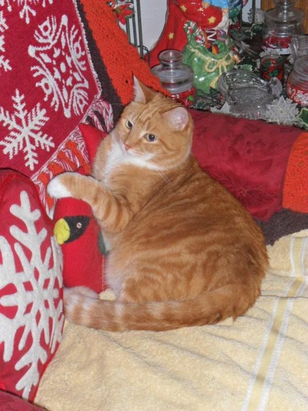 samhain cardinal pillow nap