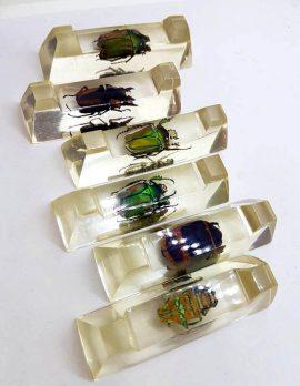 Unique French Set of 6 Knife Rests - Scarab Beetles in Resin - Antique / Vintage
