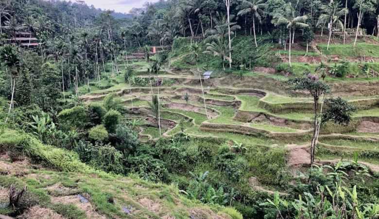 Ubud Bali Rice Terraces