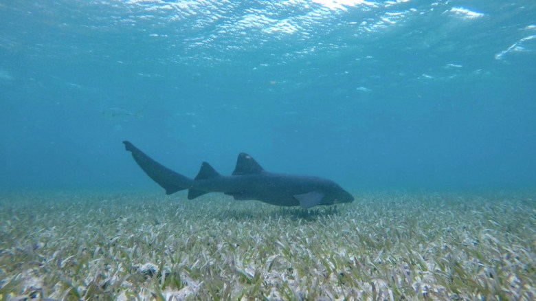 Caye Caulker Snorkeling tips