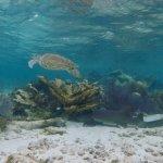 Snorkeling in Caye Caulker, Belize – Hol Chan Marine Reserve