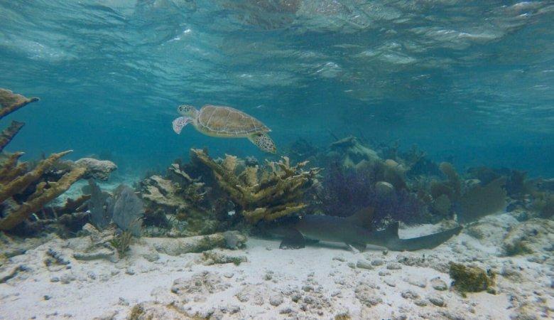 Snorkeling Caye Caulker