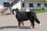 Hofhund Mira
