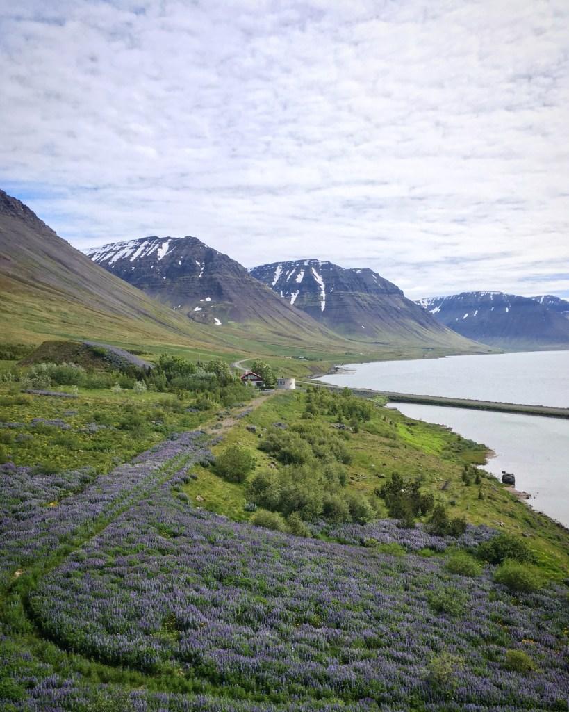 beautiful scenery in the Westjords, Iceland in Summer