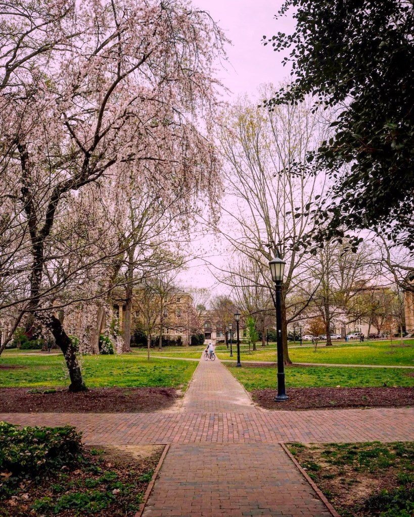Chapel Hill campus at NC State University