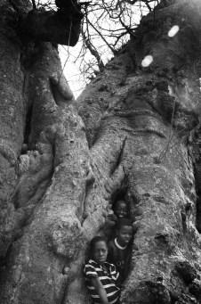 Boys in a baobab