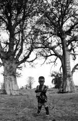 Seert beneath some baobabs.