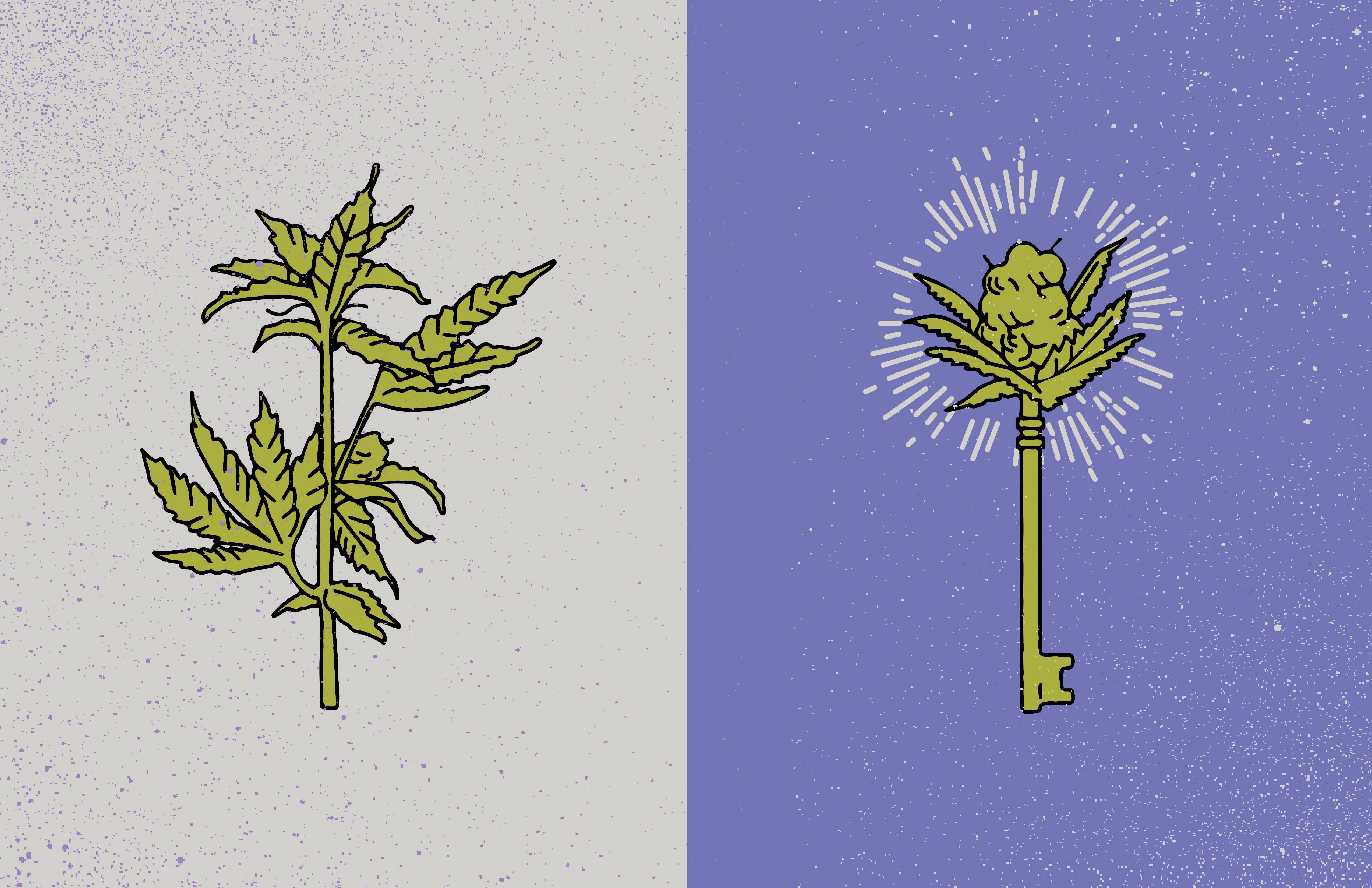 weed-01