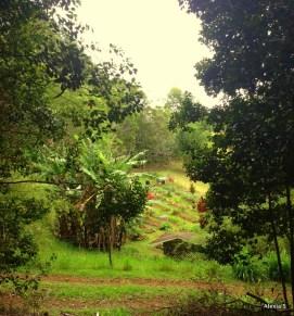 garden from afar
