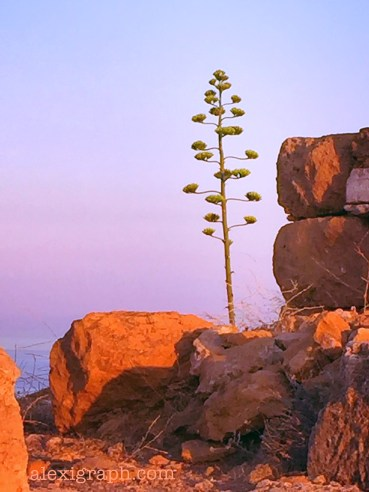 Photo of a lone tree on a cliff in Sounio, Greece
