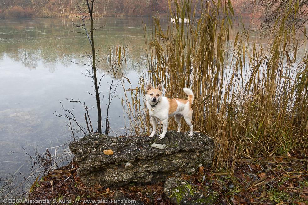 Hund, Dezembermorgen am Wöhrsee