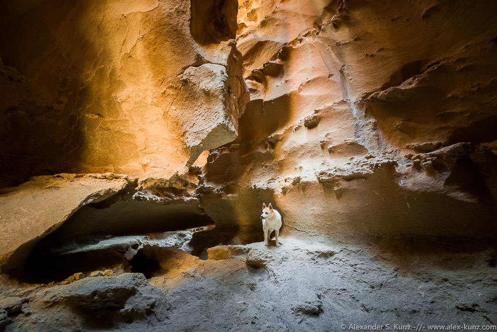 Dog in a Slot Canyon, Coyote Mountains Wilderness, Imperial County, CA.