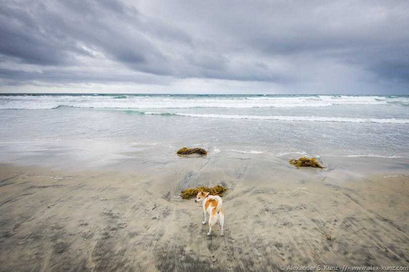 Toni und das Meer, Cardiff State Beach, CA. Mai 2015.