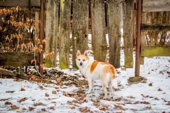 Langweilig hier! Keine Tiere die davonrennen wenn wir kommen! Januar 2010.