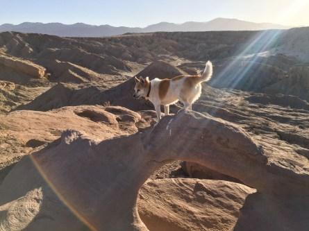 Toni klettert über einen kleinen Felsbogen in der Wüste.