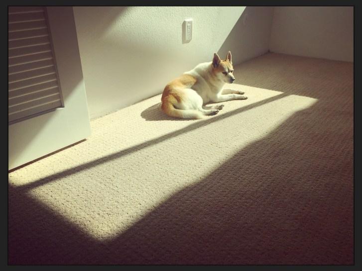 Toni wandert mit der Sonne auf dem Teppich dösend durch das Zimmer.