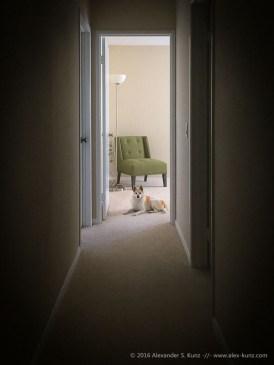 Stilleben mit Sessel und Lampe, garniert mit einer herrschaftlich guckenden Toni.