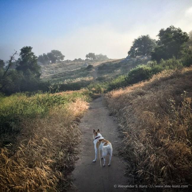 Hund Toni auf dem Spazierweg