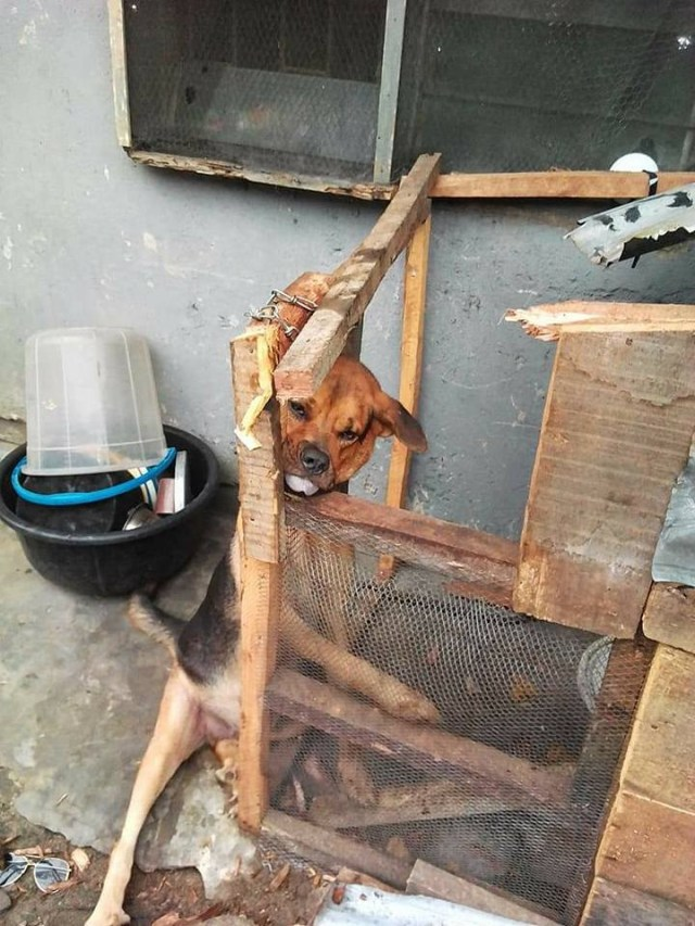 See what armed robbers did to a poor dog in Delta state (photos)