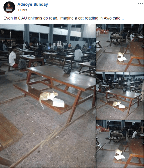 Cat found reading with students at Obafemi Awolowo University (photos)