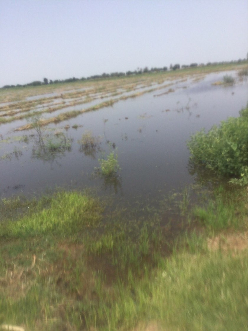 Garba Shehu says he was also affected by flooding as he shares pictures of his flooded rice farm