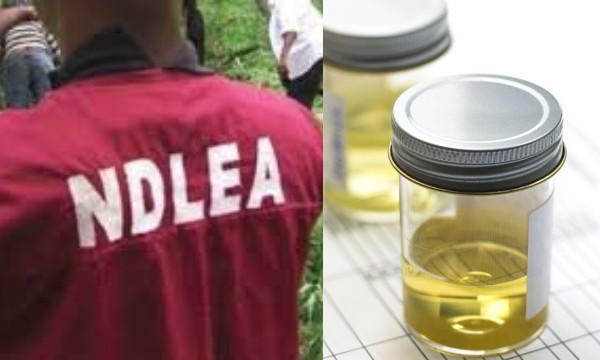 Nigerian youths now take processed urine to feel high ? NDLEA