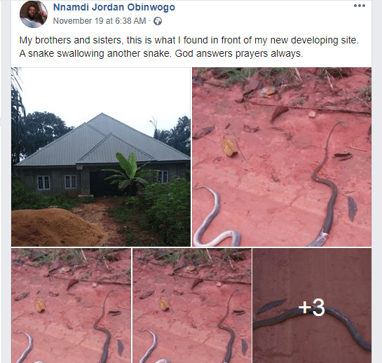 Man shares photo of a snake that swallowed another snake at his new site; says it
