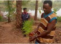 NSCDC uncovers Indian hemp farm in a school compound in Anambra