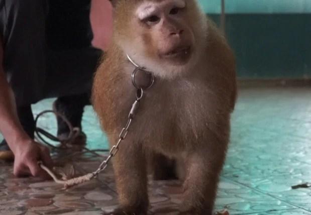 Heartbreaking footage of a monkey