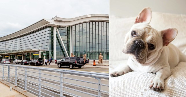 Canadian authorities launch investigation after 38 French bulldog puppies are found dead in plane cargo